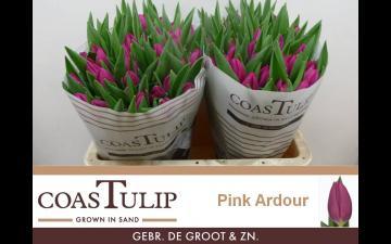 Pink Ardour