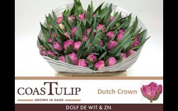 Dutch Crown