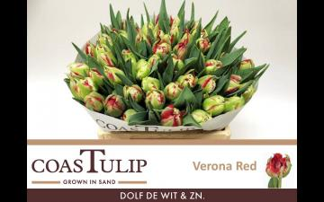 Verona Red