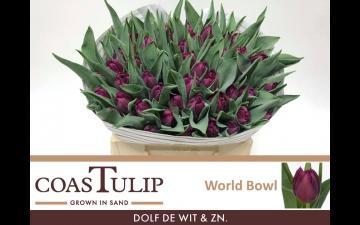World Bowl